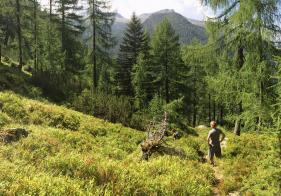 Langsam lichtet sich der Wald