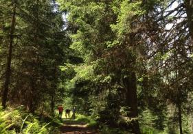 Meist führt der Weg durch schattigen Wald