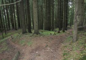 Nun gehts im Wald weiter