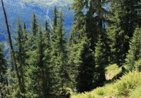 Der Böcksteiner Höhenweg führt angenehm bergab