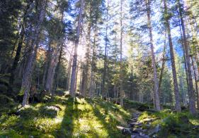 Bald wandern wir durch schöne Wälder