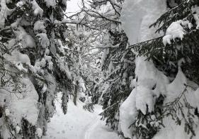 Der Weg ist tief verschneit.