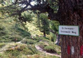 Am Dr. Greinwald Weg geht's fast eben Richtung Palfnersee.