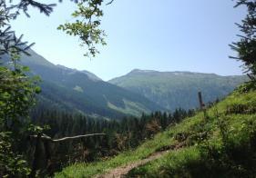 Am Wolfstall Weg. Im Hintergrund der Silberpfennig