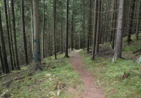 Der Trail ist flowig zu befahren