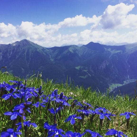 Early morning trek #badgastein #austria #trek #alps #mountains  #travel #travelwithfriends #flowers #badhofgastein #stubnerkogel