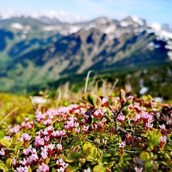 #gastein#dorfgastein#gasteinertal#badhofgastein#badgastein#fulseck#salzburg#austria#österreich#summer#sun#snow#schnee#flowers#blumen#frühblüher#springflowers#mountains#hiking#berge#greatview#wandern#amazing#amazingday#breathless#breathtaking#fascinating#seeable#greatshoot