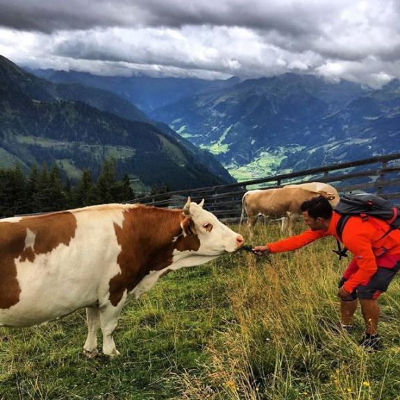 KOmpisar 🐮😃 #kossa #alpko #alperna #Österrike  #gasteinerdalen #austria #Fulseck #hikests #nature #cow