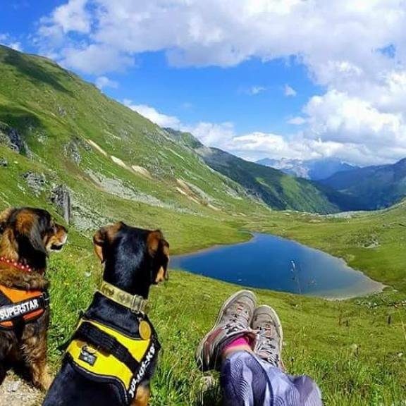 #sportgastein #gasteinertal #gasteinmoments #salzburgland #hohetauern_nationalpark #austria #österreich #berglove #bergen #lovemoutains #wandernmithund #wanderhund #wandern #hikingwithdogs #hikingdog #hikinglovers #hiking #lovemylife #naturfotografie #nature #naturephotography
