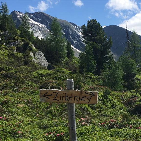 #graukogel #zirbenweg #austria #almrausch