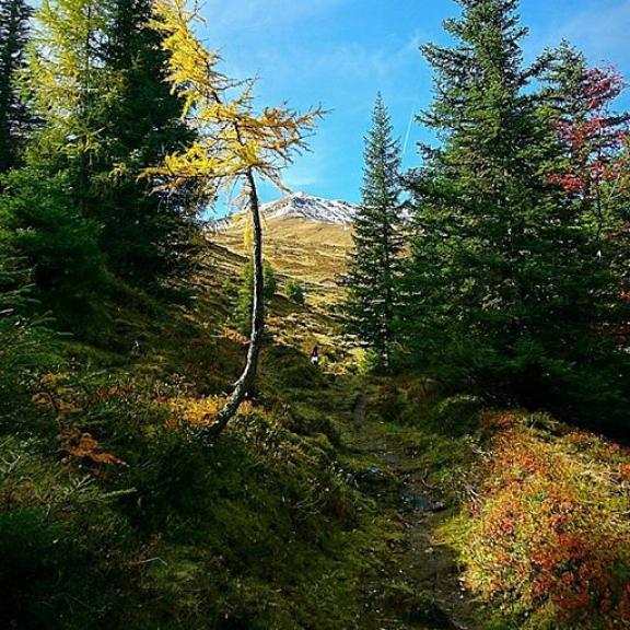 Salzburgeralmenweg#Gadaunerhochalmen#angertal