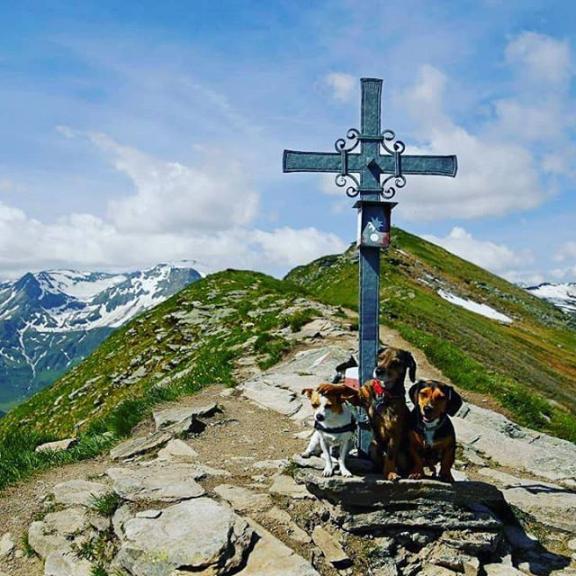#tischkogel  #salzburgerland #badgastein #gasteinertal #gasteinmoments #instaustria #weloveaustria #instadog #wanderer #wanderhund #wanderlust #ausztria🇦🇹 #österreich #berglove #mountainslovers #mountains #mountain_world #hikingwithdogs #hiking #hikingdog #hikinglovers #lovemoutains #canonphoto #lovemylife #lovemydog #doglove  #túrakutyák #túra #hegyek  #hikingphotography
