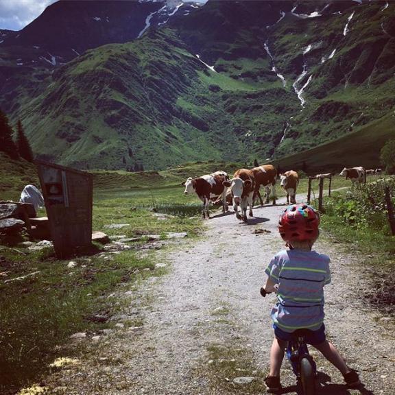Marlboro Man #sportgastein #badgastein #gasteinertal #haushirt #kühe #cows #puky #marlboroman