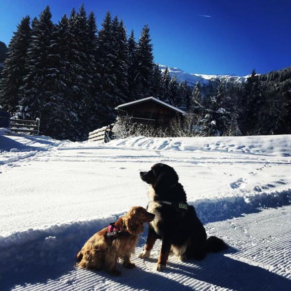 Blue sky and lots of snow, Bad Hofgastein is ready for action! #blue #sky #snow #mountains #calling #ready #action #angertal #badhofgastein #austria #bernesemountaindog #berner #bernersennen #cockerspaniel #dogs #doggie #fun #enjoy #play #gastein #skiing #skiamadé