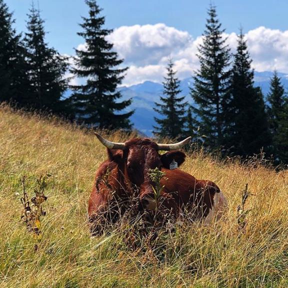 #dorfgastein #badgastein #fulseck #alm #alp #cow #ox #wildlife #animal #grass #mountains #austria #österreich #alpes #alpen #hohetauern #gebirge #2000m #nature #naturelovers #landscape #landscapephotography #tree #travel #travelblogger #travellife #wanderlust #summer #walk #countryside