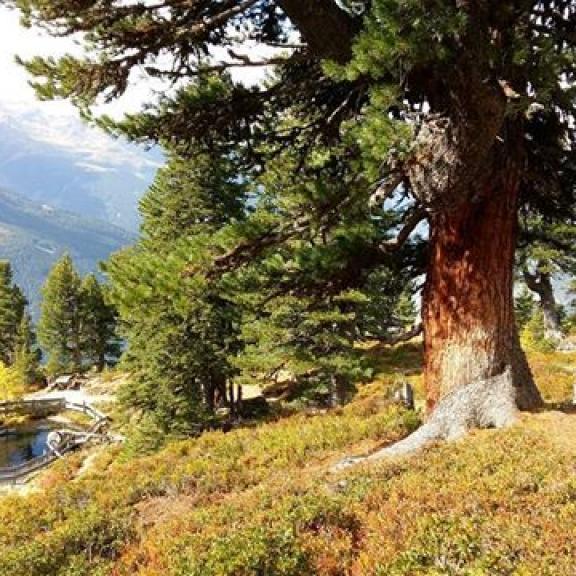 Taking in the beautiful Autumn colours and scenery auf der #Graukogel #gasteinertal #zirbenweg