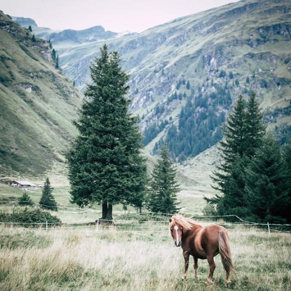 It's time for horses and more horses ... Někdy mám pocit, že místo abych byla s přibývajícím časem rozumější, jde to se mnou spíš kopce. A tak pokaždé, když jsme v Rakousku potkali koně, krávu,ovci nebo krávu musela jsem jim běžet naproti. Chichotajíc se jako malá holka, jsem stála na kraji ohrady a snažila se je nalákat, aby přišli blíž a nechali se pohladit. Pozitivní na tom je, že mám vedle sebe V., který se za mě u toho sice stydí, ale alespoň může fotit.  #feelthealps #optoutside #getoutstayout #theoutbound #ihike #outdoorlife #naturelovers #intothewild #thegreatoutdoors #wildernessnation #wildernessculture #forgeyourownpath #adventurethatislife #thecoolmagazine #roamearth #stayandwander #seeyououtthere #roam #nationalparkhohetauern #mountains #sportgastein #igerscz #earthpix #topaustriaphoto #visitaustria #travelstoke  #whereveryougo #fantastic_earth #horses #horse . . @visitgastein @visitaustria @discoveraustria