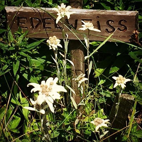 ... bring me #Edelweiss | #Poserhöhe #BadGastein