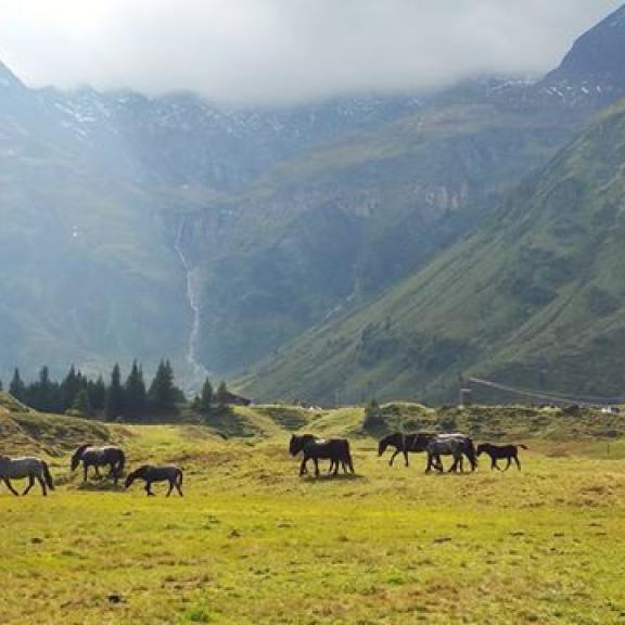 #österreich #austria #nassfeldalm #sportgastein #schafabtrieb #tiere #pferd #pferde #landschaft #berge #berg #animal #horse #horses #landscape #mountains #mountain  #gasteinertal