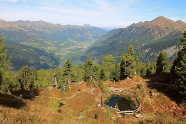 Der Zirbenweg am Graukogel